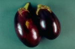 aubergine deux.JPG